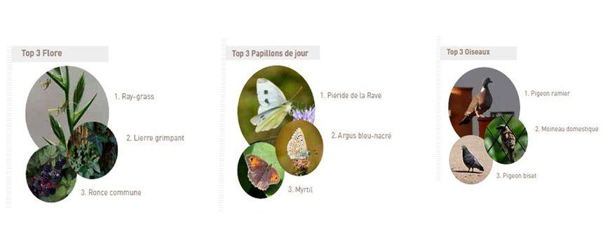 Biodiversité en Ile-de-France