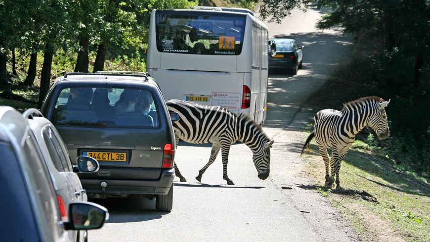 Une fois dans le parc de Peaugres, les voitures croisent des animaux - archives