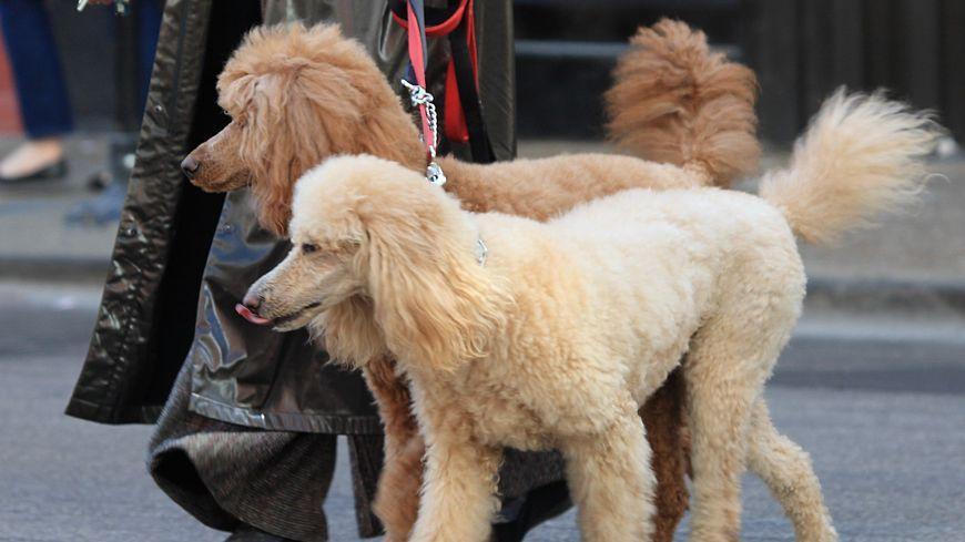 Pas facile d'avoir un chien en ville
