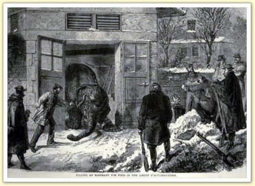 Les éléphants du jardin d'acclimatation Castor et Pollux sont abattus, déc 1870
