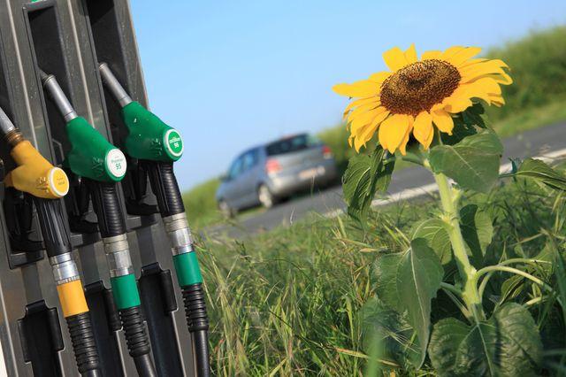 Les biocarburants mauvais pour l'environnement