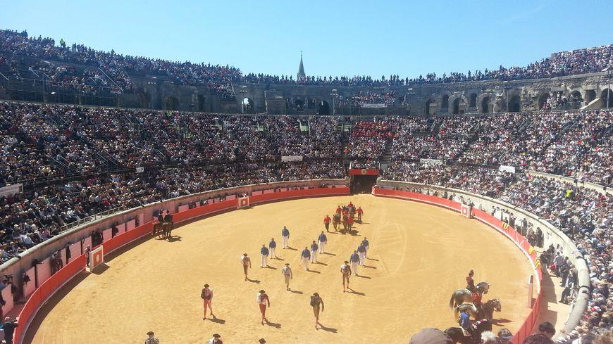 Les élevages ont déçu cette année à Nîmes