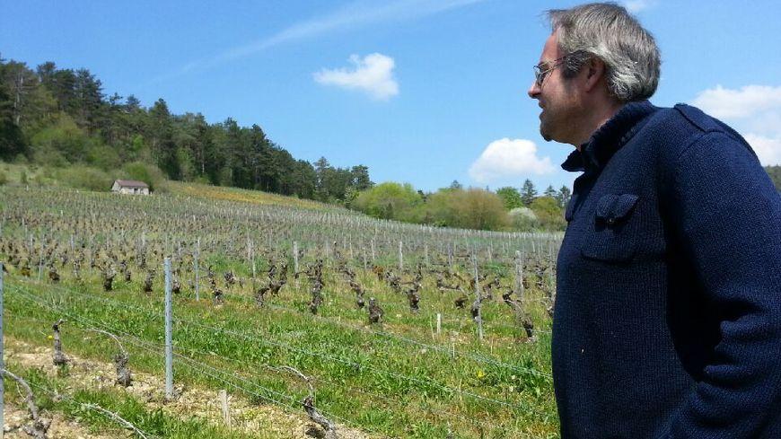 80 % des vignes de Ghyslain Brigand ont été touchées par le gel