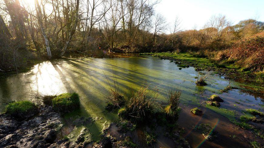 La question de l'environnement sur le site de Notre-Dame-des-Landes