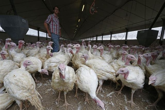 la france inquiète pour ses exportations de volaille