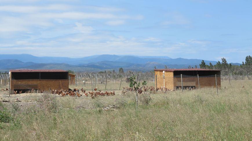 La ferme avicole s'étend sur deux hectares environ.
