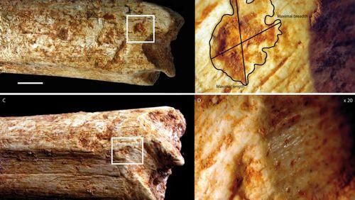 Qui a croqué Homo Rhodesiensis ?