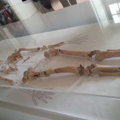 Squelette de Nithard