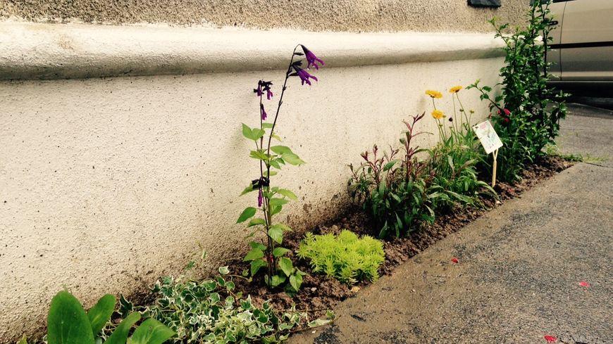 c7b8ab17d0ba Tours   le bitume des trottoirs remplacé par des fleurs