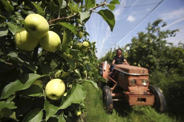 face à l'embargo russe, les filières agroalimentaires demandent des aides
