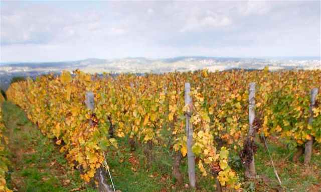les vignobles de bourgogne dévastés par les orages de grêle