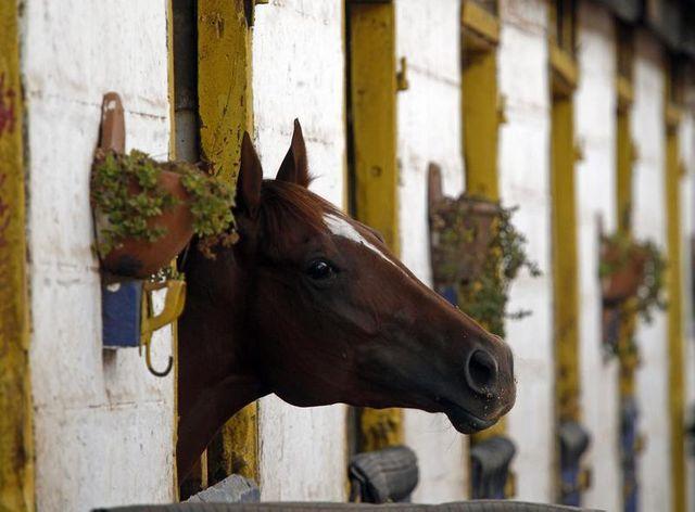 le gouvernement tente d'amadouer les centres équestres