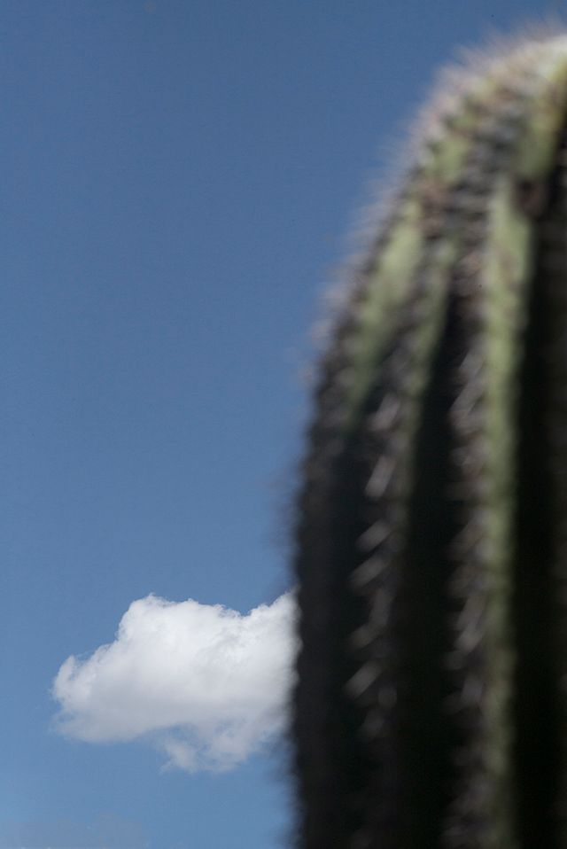Cactus, nuage et ciel, Vertical Horizon © Ralph Gibson