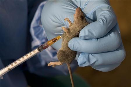 des souris amnésiques retrouvent la mémoire
