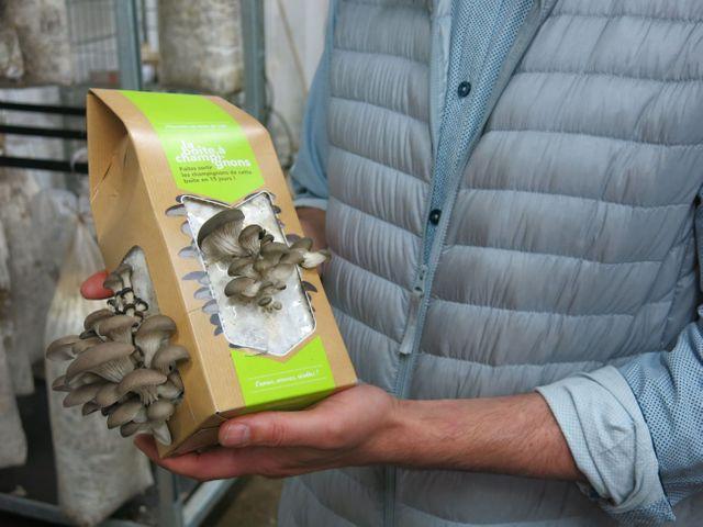 L'entreprise Upcycle produit des pleurotes dans un mélange de marc de café et de copeaux de bois.