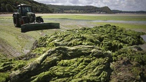 Épisode 8 : Algues vertes : le déni  (2/2)