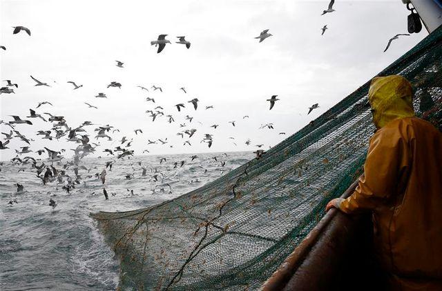 le parlement européen contre l'interdiction de la pêche en eaux profondes