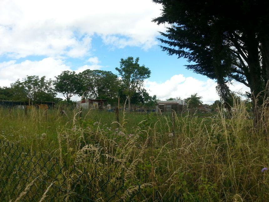 Bientôt les arbres fruitiers et les arbustes à baie seront plantés ici