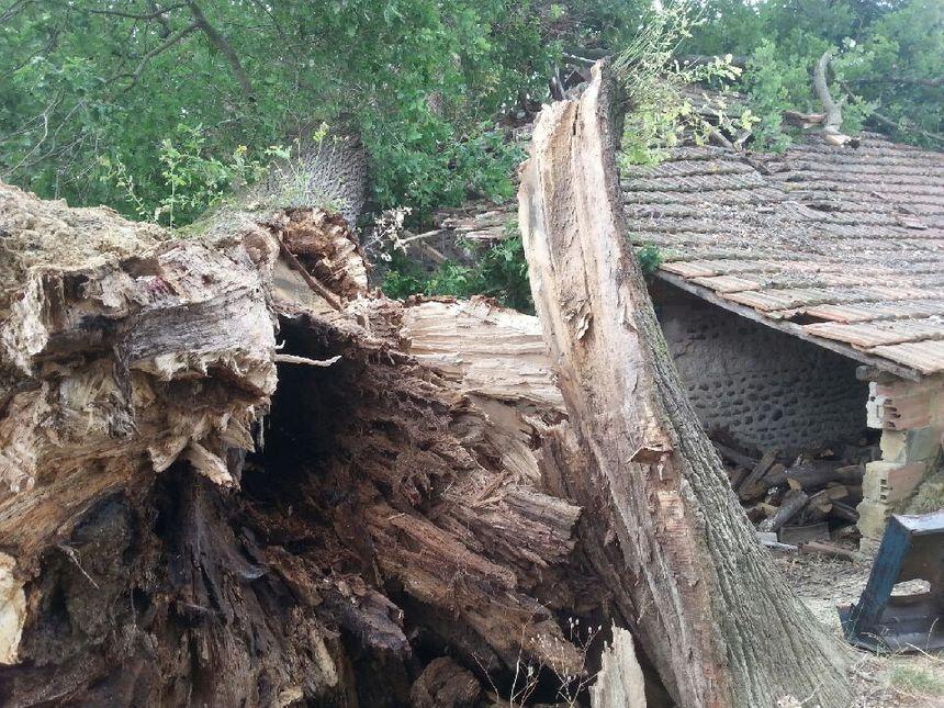 Le tronc du vieil arbre etait creux