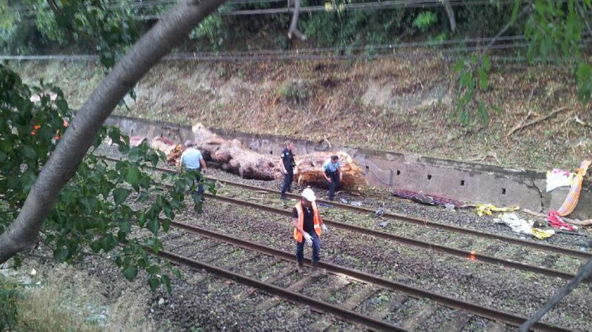 Un morceau du tronc percuté par le train