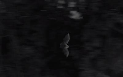 """""""Une vie de grand rhinolophe"""", un film de Tanguy Stoecklé."""