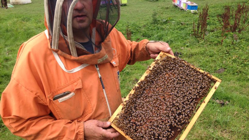 apiculteur 59