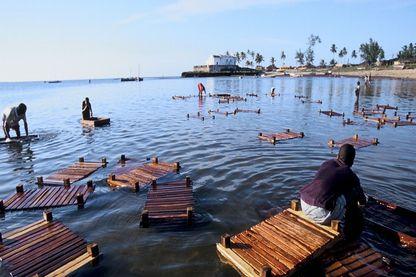 La pêche traditionnelle sur l'île de Mozambique