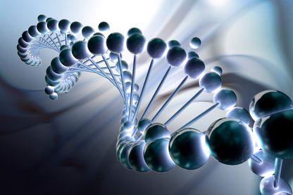 DNA bp