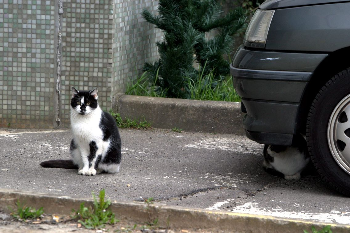 Le nombre d'animaux abandonnés cet été a littéralement explosé, notamment en Gironde.
