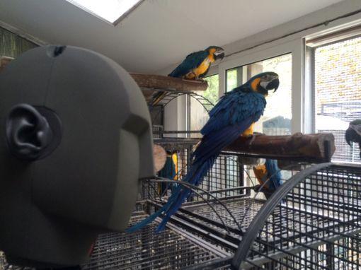 Georges et les perroquets