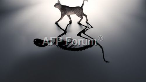 Épisode 5 : Le chat de Schrödinger