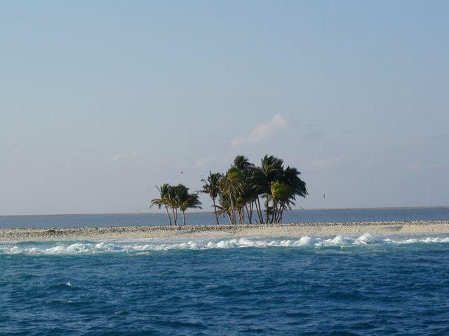Une palmeraie sur l'atoll de Clipperton