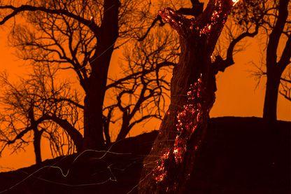 Durant l'été 1960, des incendies de forêt ont ravagé le Montana