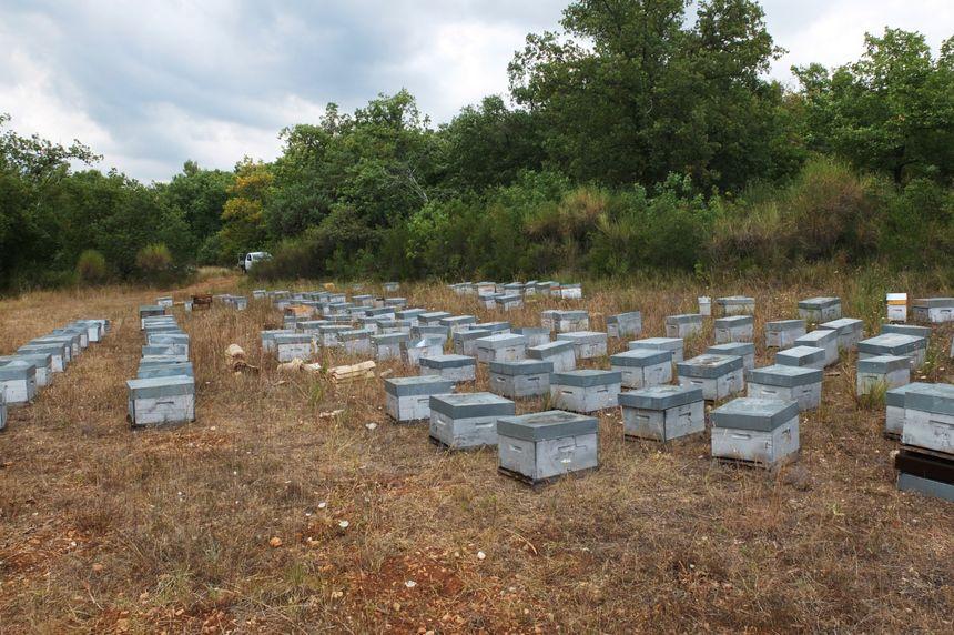 A Saint-Cézaine-sur-Siagne, Marc Rebuffo a une centaine de ruches