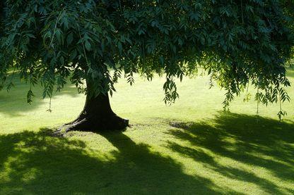 Un arbre en plein été