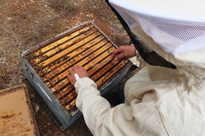apiculteur grasse