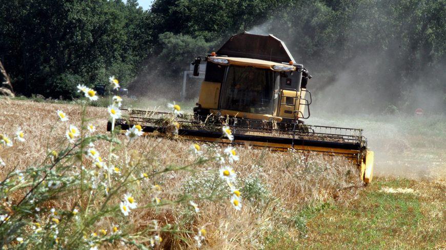 La récolte française est estimée comme la plus mauvaise des 30 dernières années par l'Agreste