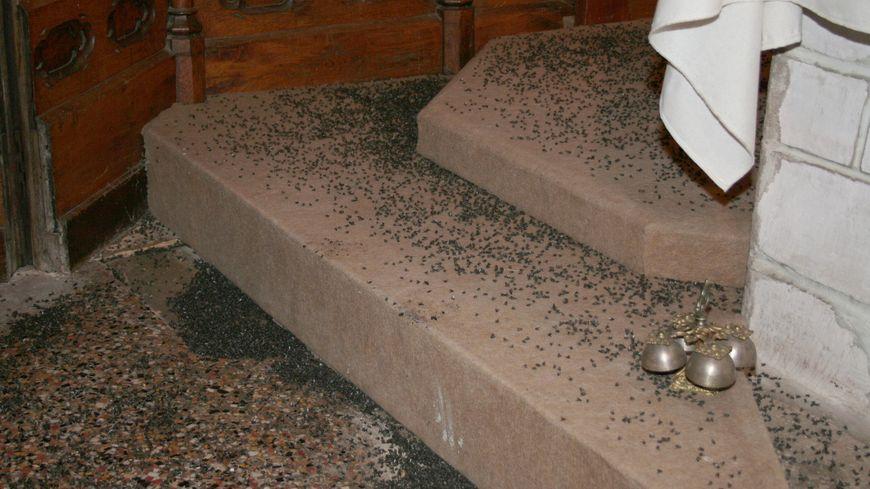 myst re dans les vosges des dizaines de milliers de mouches envahissent trois glises. Black Bedroom Furniture Sets. Home Design Ideas