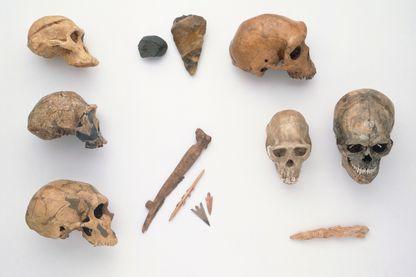 Crânes d'homme de Néanderthal , Homo erectus , Australopithèque , Homo sapiens , Chimpanzé - des artefacts et des outils de chasse en silex