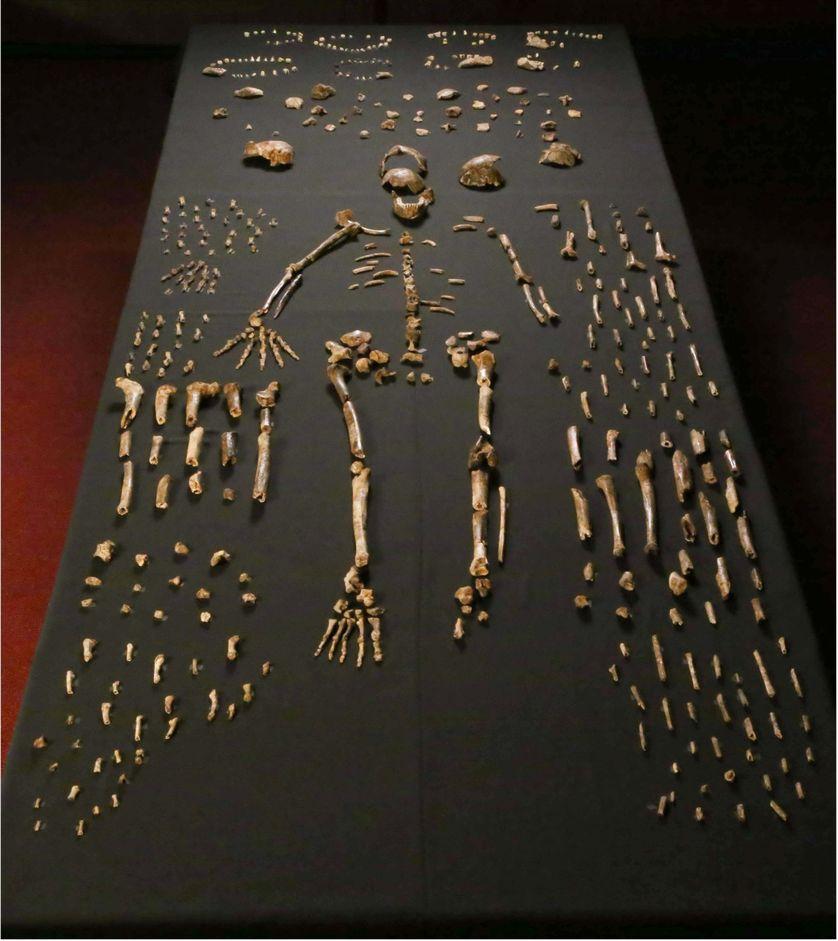 Homo naledi découvert en 2015