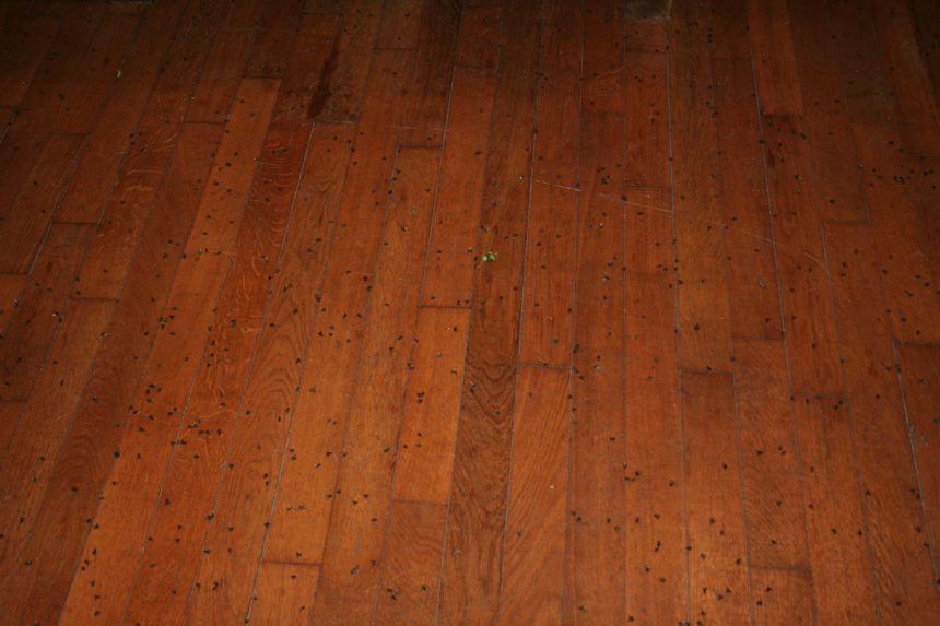 Près de six litres de mouches ont été balayées mais il en reste encore des milliers au sol.
