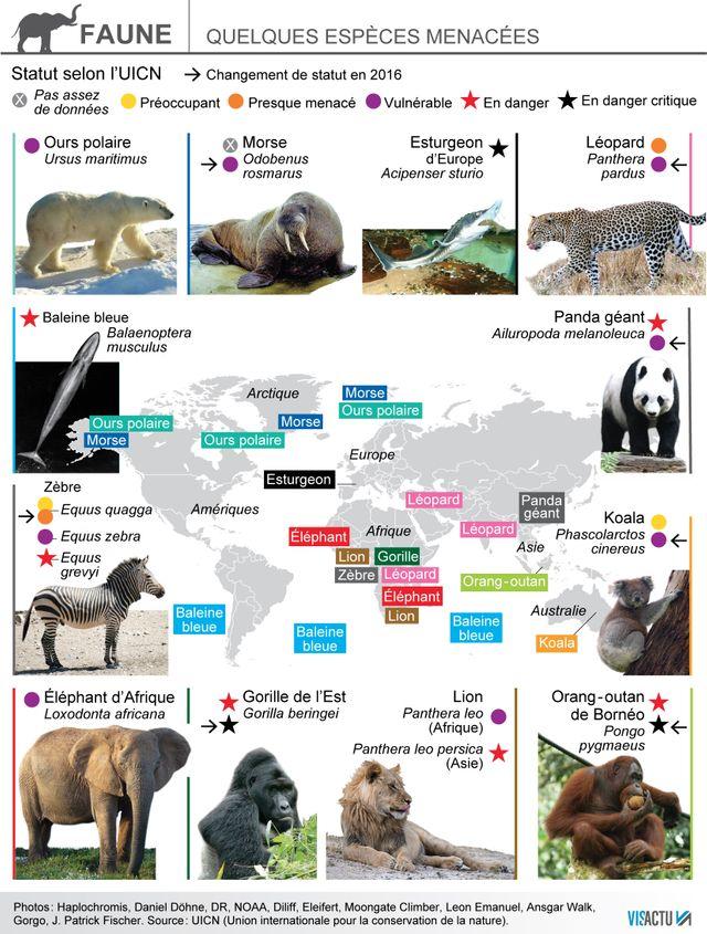 Les espèces menacées selon le dernier recensement de l'UICN