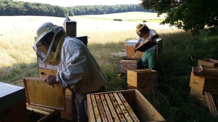 La production de miel français a été divisée par deux en 15 ans
