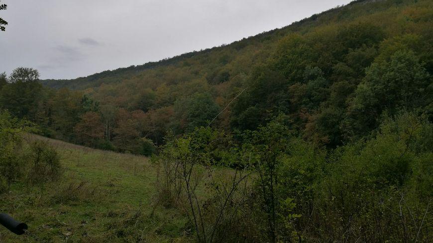 La forêt du Val-Suzon, poumon vert aux portes de Dijon.