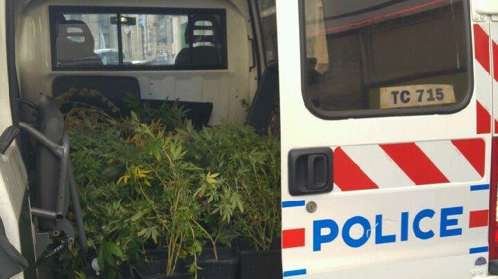 Les policiers ne sont pas allés en jardinerie, mais dans un appartement du centre ville