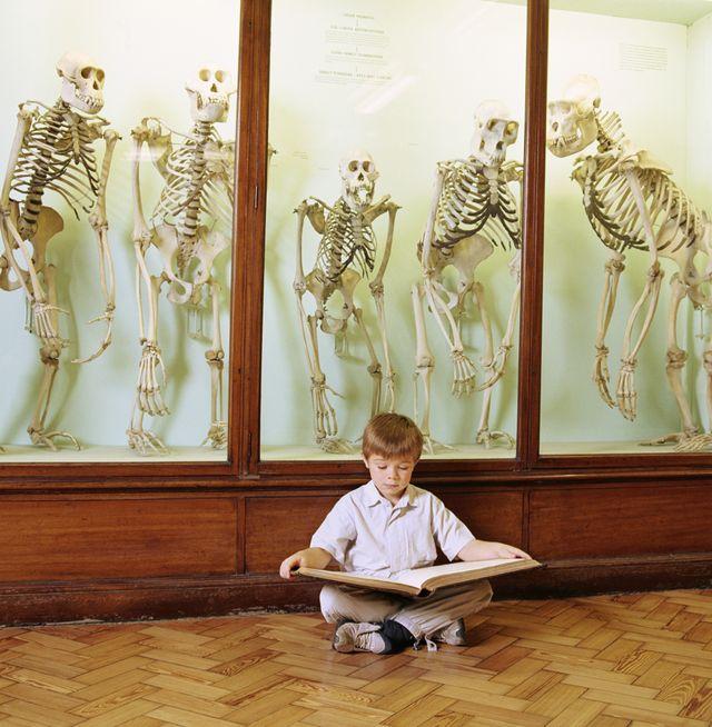 Jeune garçon en train de lire devant un cabinet de squlettes de primates