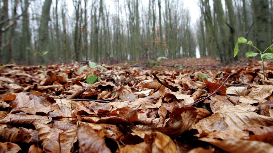 La vieille dame âgée de 82 ans a été agressée dans un bois près du refuge Spa de la Perbousie.
