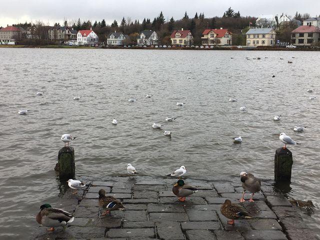 à Reykavik