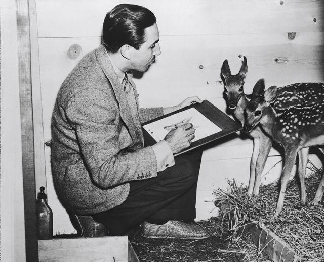 Walt Disney dessinant un faon en 1942 pour Bambi