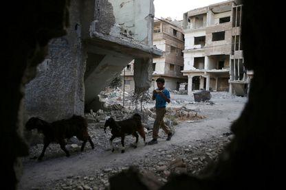 Un garçon mène un troupeau de chèvres près de bâtiments endommagés dans la ville assiégée tenue par les rebelles de Zamalka, dans la banlieue de Damas, Syrie, 3 octobre 2016